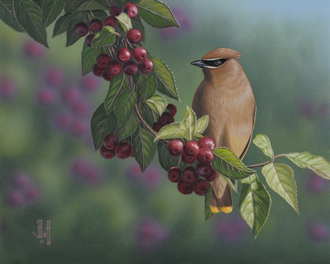 Framed Waxwing Berries Print