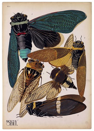 Framed Insects, Plate 1 Print
