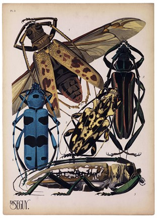 Framed Insects, Plate 13 Print