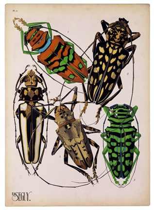 Framed Insects, Plate 14 Print