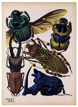 Framed Insects, Plate 7 Print