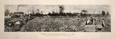 Framed Picking Cotton in GA 1915 Print