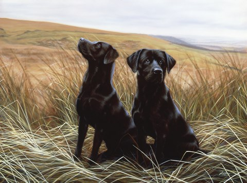 Framed Two Black Labs Print