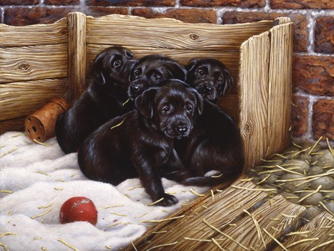 Framed Black Lab Puppies Print