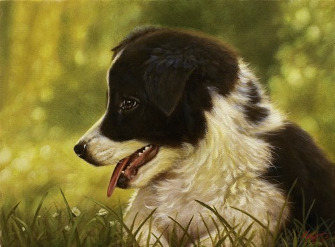 Framed Border Collie Pup 2 Print