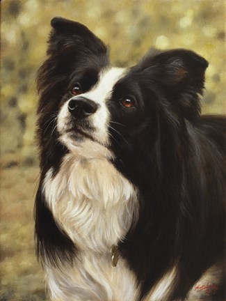 Framed Border Collie 2 Print