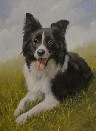 Framed Border Collie 8 Print