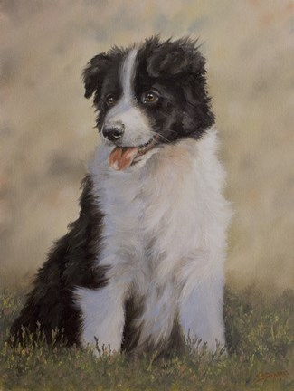 Framed Border Collie 12 Print