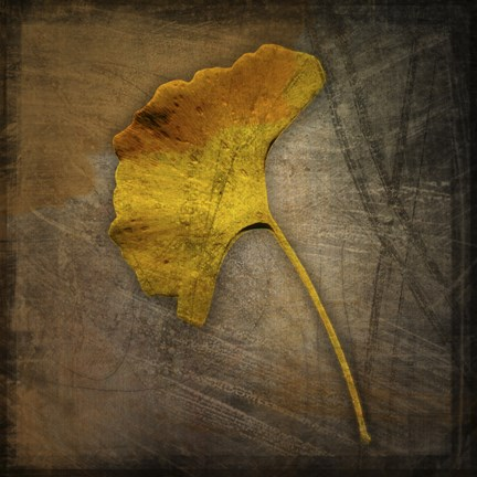 Framed Gingko 1 Print