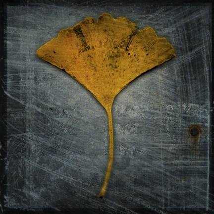 Framed Gingko 2 Print