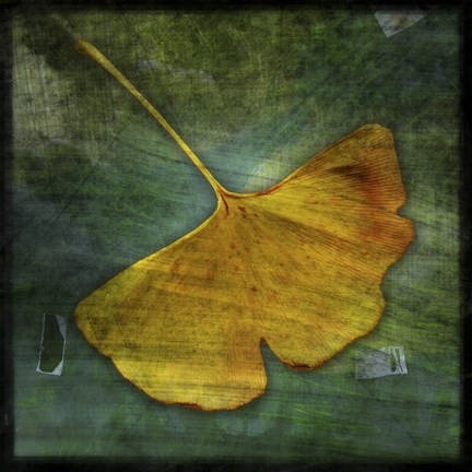 Framed Gingko 3 Print