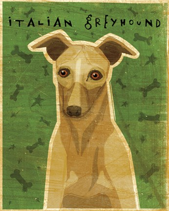 Framed Italian Greyhound - Fawn Print