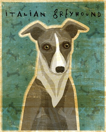 Framed Italian Greyhound - White and Grey Print