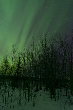 Framed Aurora Borealis over Trees Print