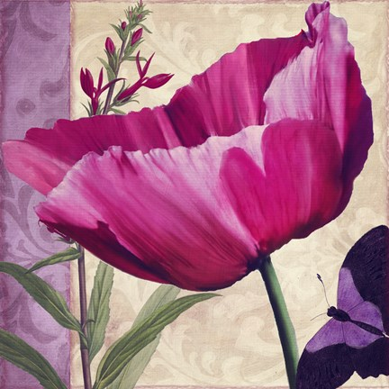 Framed Pink Poppy I Print
