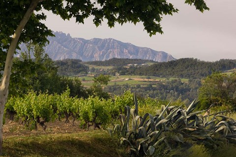 Framed Vineyards and Cactus with Montserrat Mountain, Catalunya, Spain Print