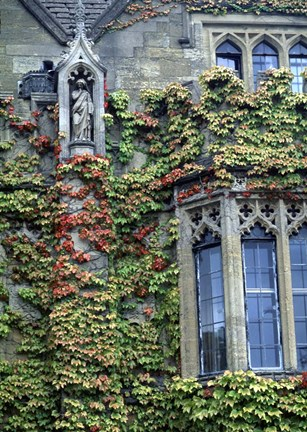 Framed Halls of Ivy, Oxford University, England Print