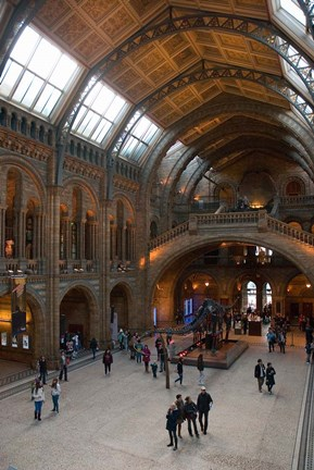 Framed England, London, Natural History Museum Great Hall Print