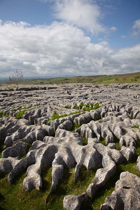 Framed Limestone Pavement, Malham Cove, Yorkshire Dales National Park, North Yorkshire, England Print