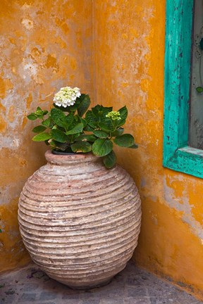 Framed Flower in pot, Crete, Greece Print