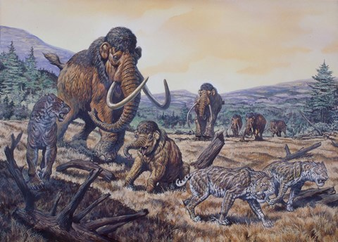 Framed Herd of Woolly Mammoth and Scimitar Sabertooth, Pleistocene Epoch Print