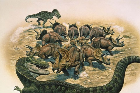 Framed Herd of Triceratops Defend their Territory Print
