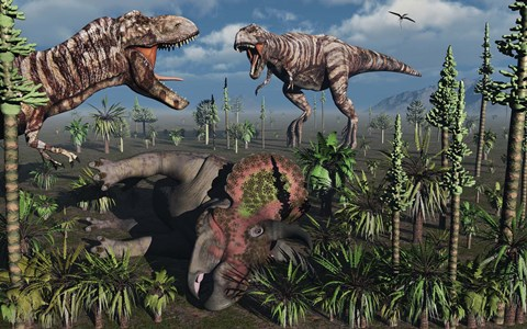 Framed Two T Rex dinosaurs confront each other over a dead Triceratops Print