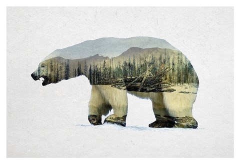 Framed Arctic Polar Bear Print