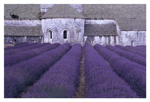 Framed Lavender Abbey Print
