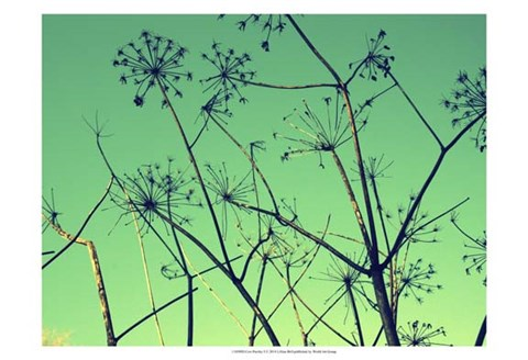 Framed Cow Parsley I Print