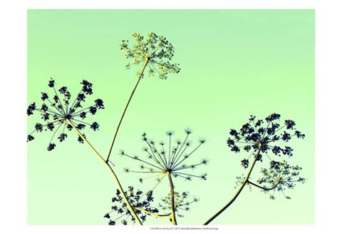 Framed Cow Parsley II Print