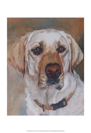 Framed Tucker Yellow Lab Print