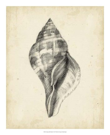 Framed Antique Shell Study II Print