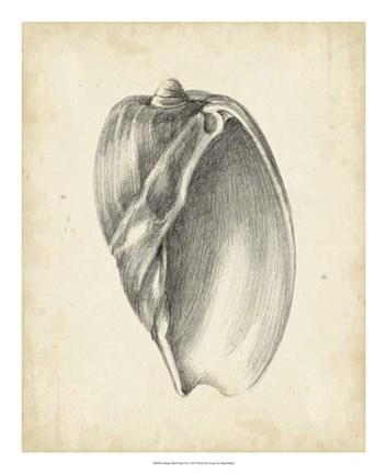 Framed Antique Shell Study VI Print
