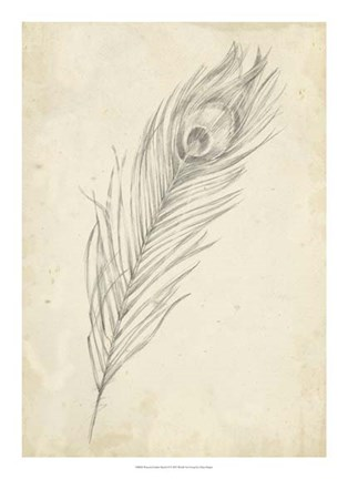 Framed Peacock Feather Sketch II Print