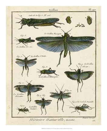 Framed Histoire Naturelle Insects II Print