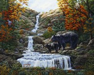 Black Bear Falls Art