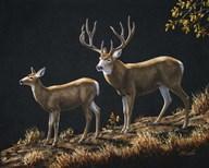 Mule Deer Ridge  Fine Art Print