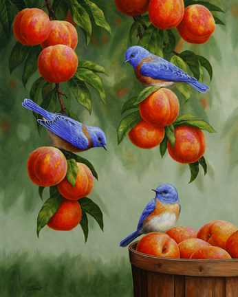 Framed Bluebirds and Peaches Print