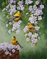 Goldfinch Blossoms Art