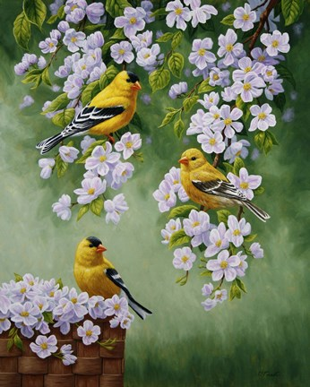 Framed Goldfinch Blossoms Print