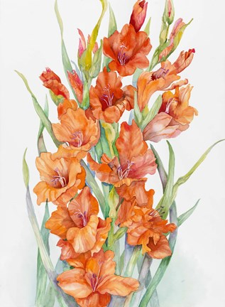 Framed Hot Orange Gladiolus Print