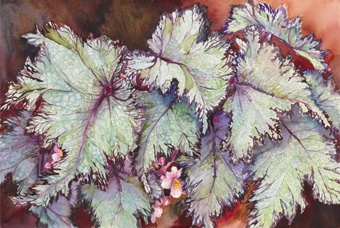 Framed Begonia Leaves Print