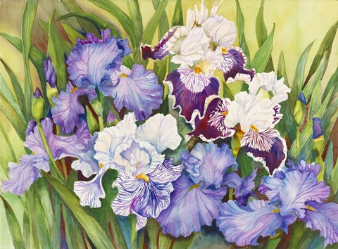 Framed Irises in Shades of Lavender Print