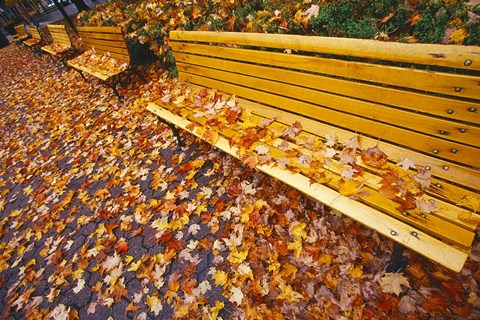 Framed Quebec City Park Bench in Fall Print