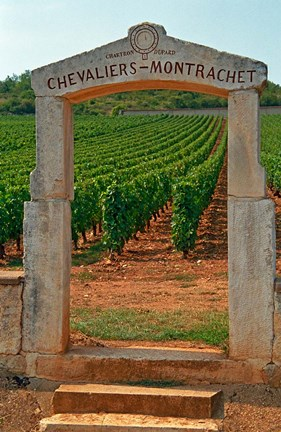 Framed Stone Portico to the Vineyard Chevalier-Montrachet Print