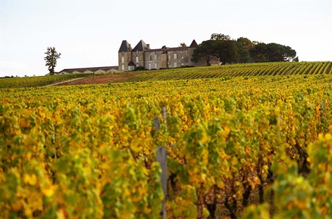 Framed Vineyard and Medieval Chateau Print