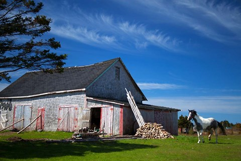 Framed Weathered barn and horse, Guysborough County, Nova Scotia, Canada Print