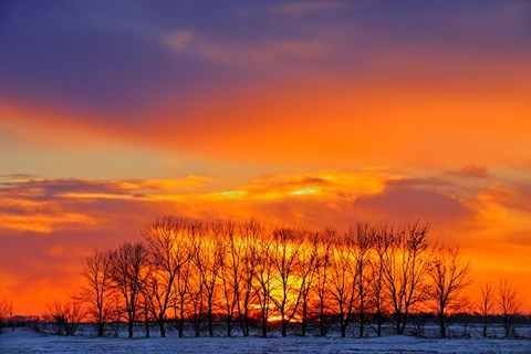 Framed Altona Trees at Sunrise Print