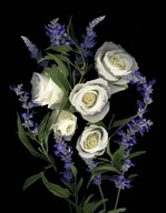 White Rose & Salvia  Fine Art Print